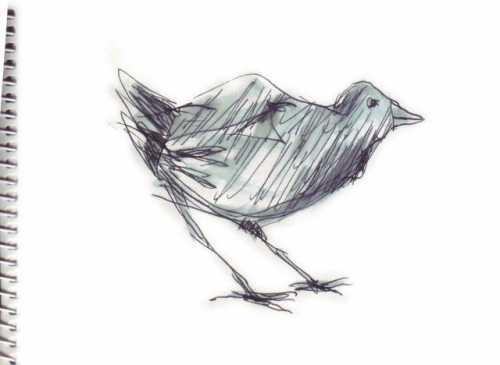oiseau 35.jpg